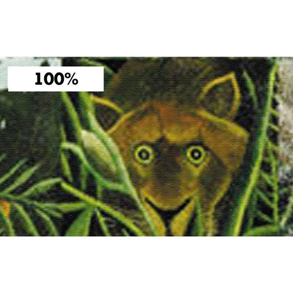 fototapet-tropicheski-pazel (4)
