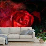 fototapet-chervena-roza (3)