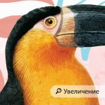 fototapet-tukan-i-papagal (4)